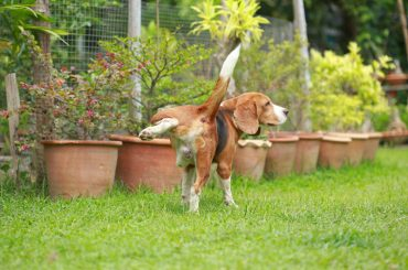 Stop neighbor's dog from peeing in your yard
