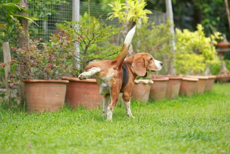 How to Stop Your Neighbor's Dog From Pooping & Peeing in ...
