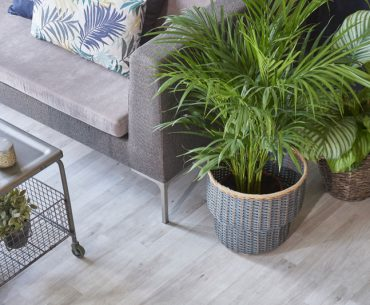 Plants and gray floor.