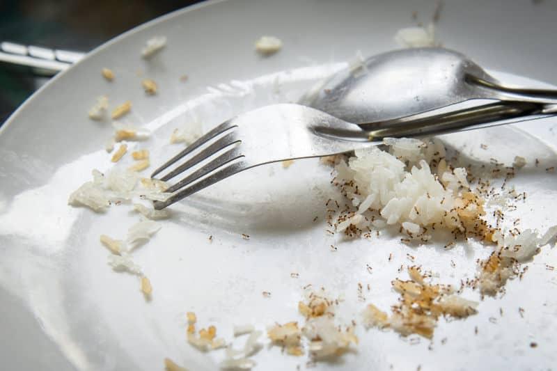 Ants on food leftovers.