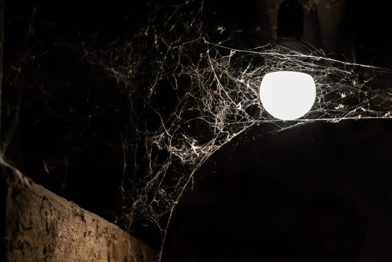 How to get rid of spiders from your basement.