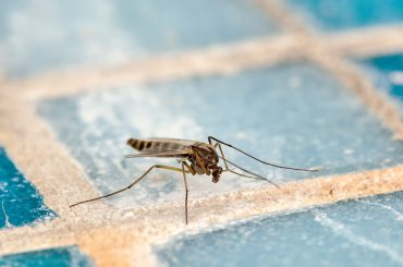How to get rid of mosquitos in the house.