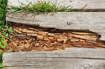 Wood rot spreading. Types of wood rot.