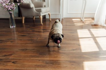 Protect your hardwood floors from dog scratches.