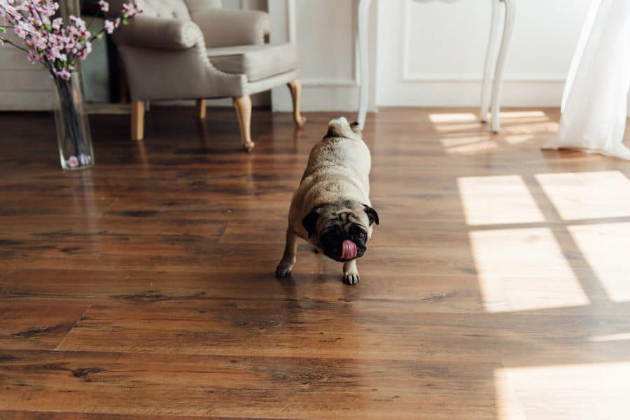 Protect Hardwood Floors From Dog Scratches, Laminate Flooring And Dogs