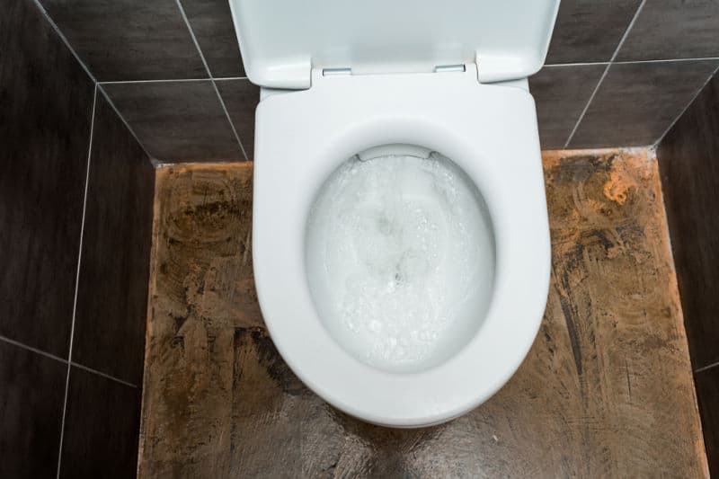 Plastic toilet seats: The pros and cons.